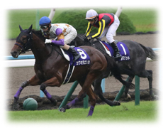 福島牝馬ステークス 特徴