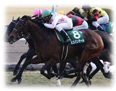 京都牝馬ステークス 特徴